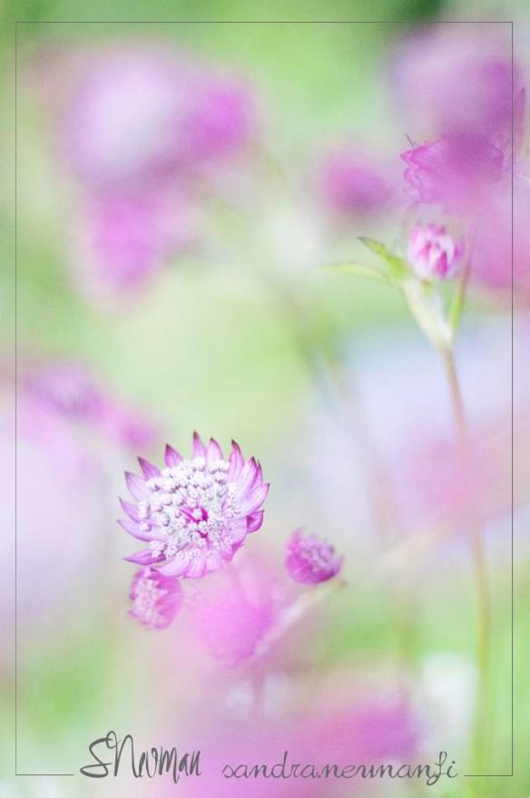 trädgård19_Medium copy